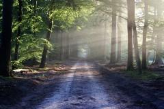 Gottes Nähe im Wald erleben - Spirituelle Wanderung im Steigerwald