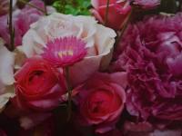 GK Rosa Blumen